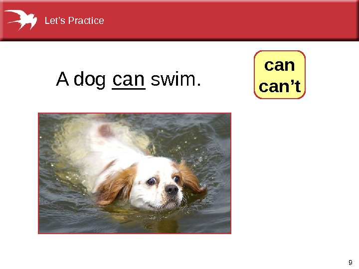 9 A dog ___ swim. can. Let's Practice  can't