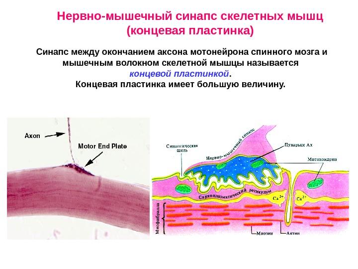 Пластинка Концевая