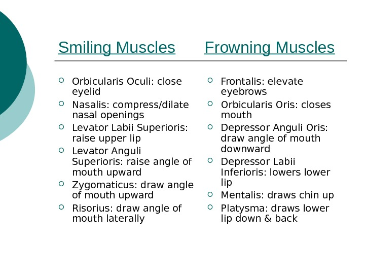 Smiling Muscles Frowning Muscles Orbicularis Oculi: close eyelid Nasalis: compress/dilate nasal openings Levator Labii Superioris: