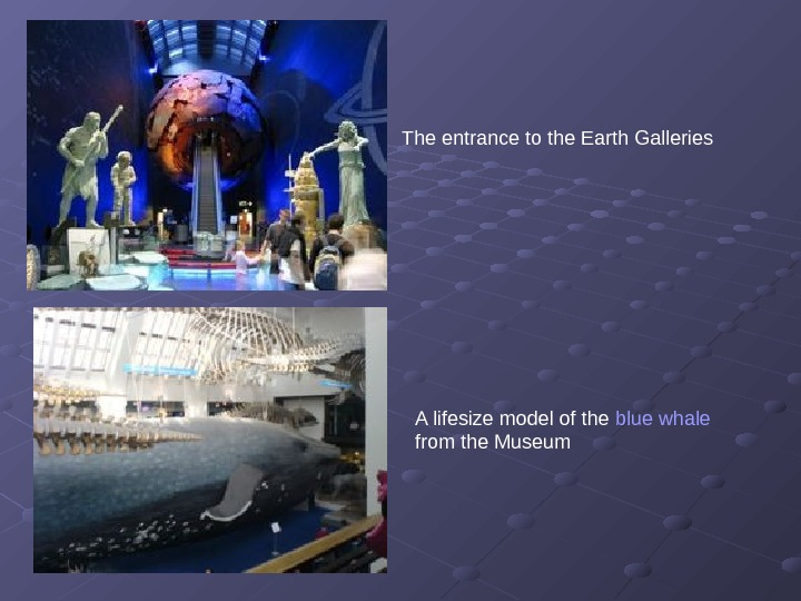 The entrance to the Earth Galleries  A lifesize model of the blue whale