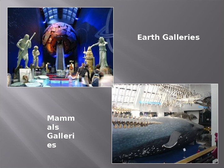 Earth Galleries Mamm als Galleri es