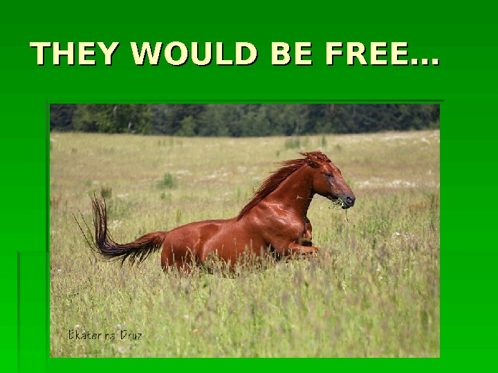 THEY WOULD BE FREE…