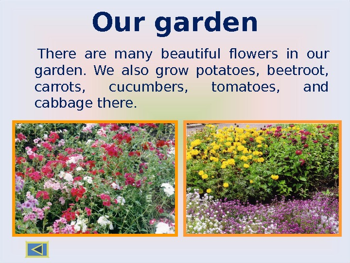 Our garden There are many beautiful flowers in our garden.  We also grow potatoes,
