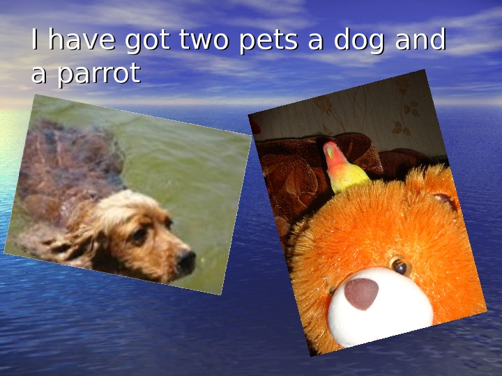 I have got two pets a dog and a parrot