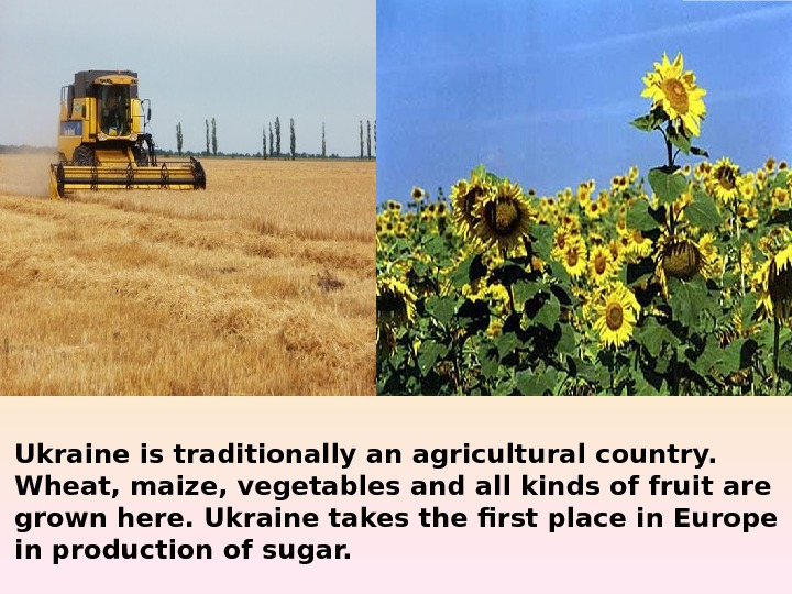 Ukraine is traditionally an agricultural country.  Wheat, maize, vegetables and all kinds of
