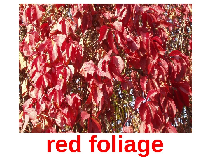 red foliage