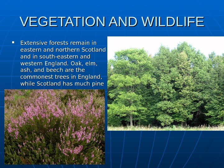 VEGETATION AND WILDLIFE Extensive forests remain in eastern and northern Scotland and in south-eastern