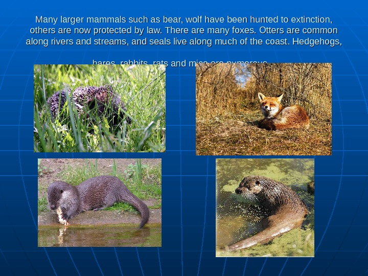 Many larger mammals such as bear, wolf have been hunted to extinction,  others