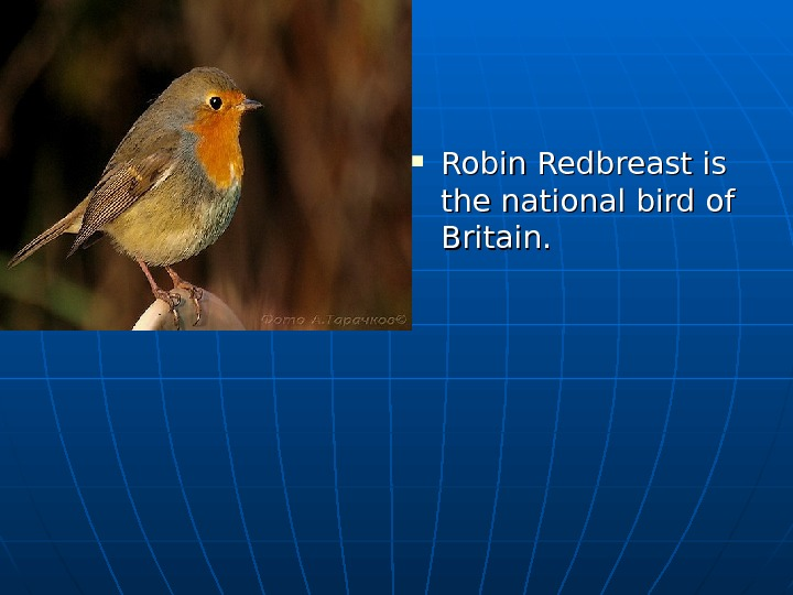 Robin Redbreast is the national bird of Britain.