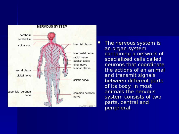 The nervous system is an organ system containing a network of specialized cells called