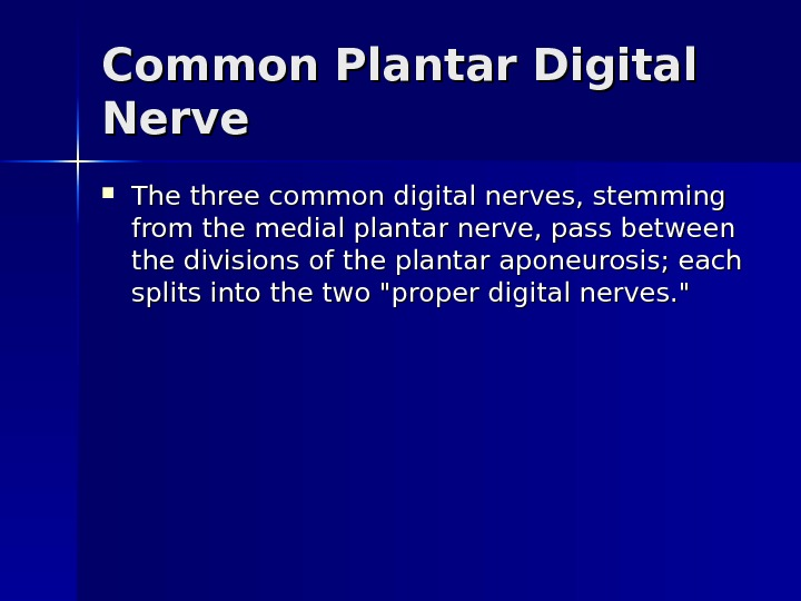 Common Plantar Digital Nerve The three common digital nerves, stemming from the medial plantar