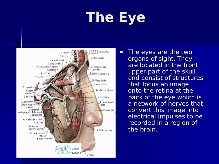 The Eye The eyes are the two organs of sight. They are located in