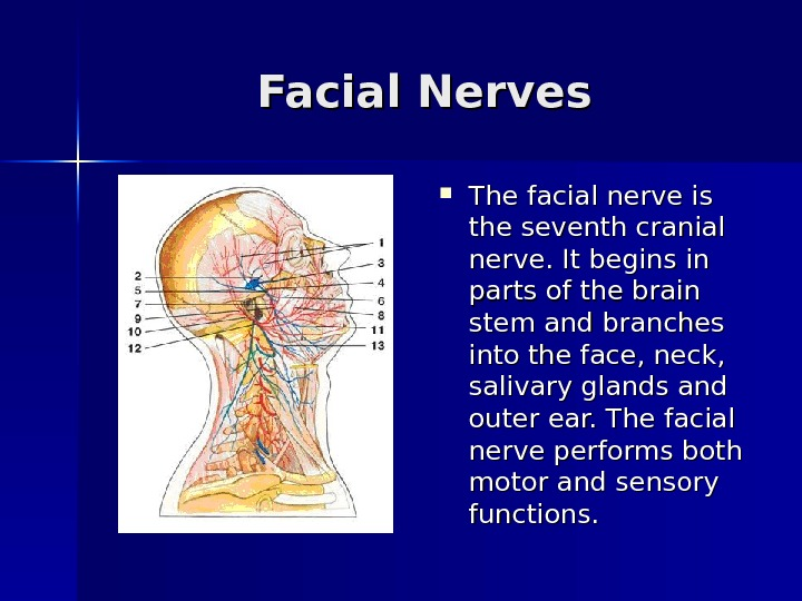 Facial Nerves The facial nerve is the seventh cranial nerve. It begins in parts