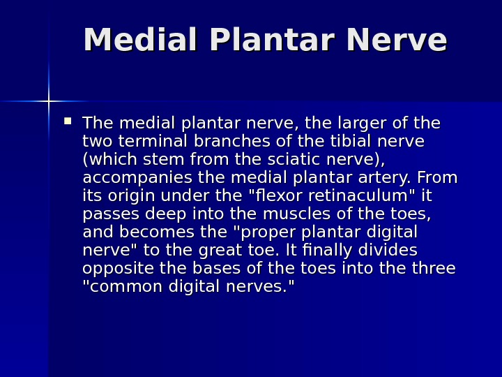 Medial Plantar Nerve The medial plantar nerve, the larger of the two terminal branches