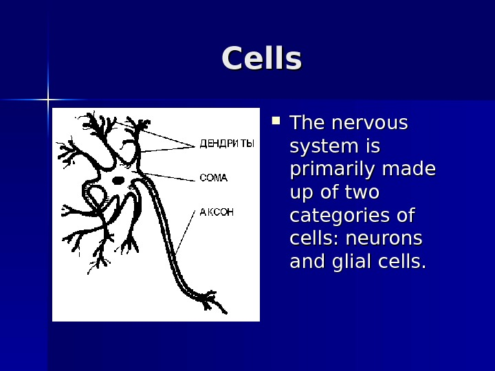 Cells The nervous system is primarily made up of two categories of cells: neurons