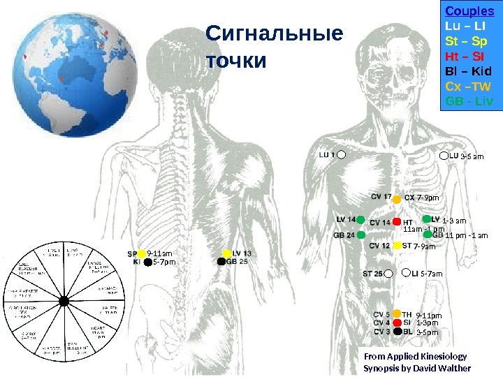 From Applied Kinesiology Synopsis by David Walther. Сигнальные точки 3 -5 am 1 -3 am 11