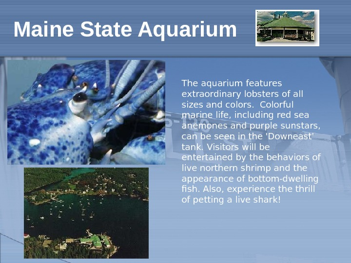 The aquarium features extraordinary lobsters of all sizes and colors. Colorful marine life, including red sea