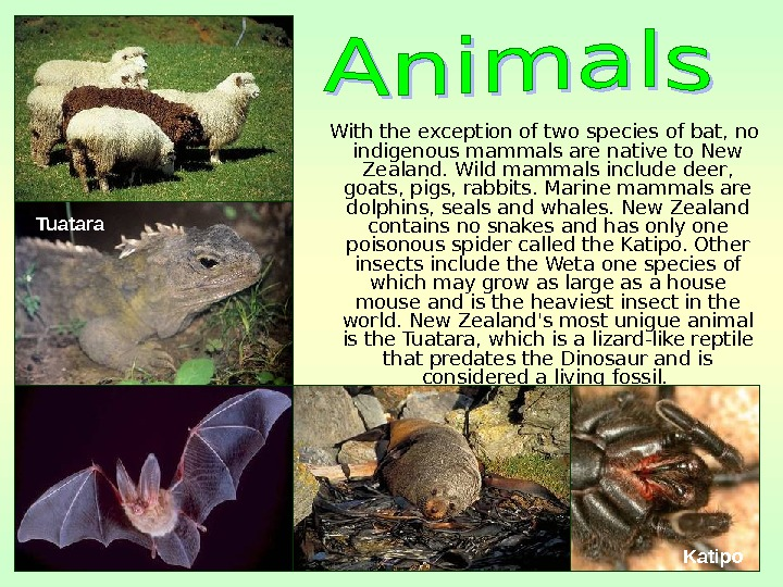 With the exception of two species of bat, no indigenous mammals are native to New