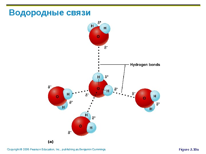 Copyright © 2006 Pearson Education, Inc. , publishing as Benjamin Cummings Водородные связи Figure 2. 10