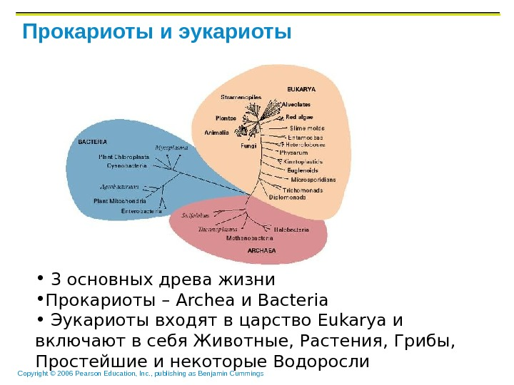 Copyright © 2006 Pearson Education, Inc. , publishing as Benjamin Cummings Прокариоты и эукариоты •