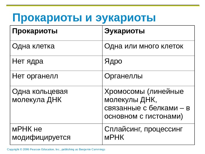 Copyright © 2006 Pearson Education, Inc. , publishing as Benjamin Cummings Прокариоты и эукариоты Прокариоты Эукариоты