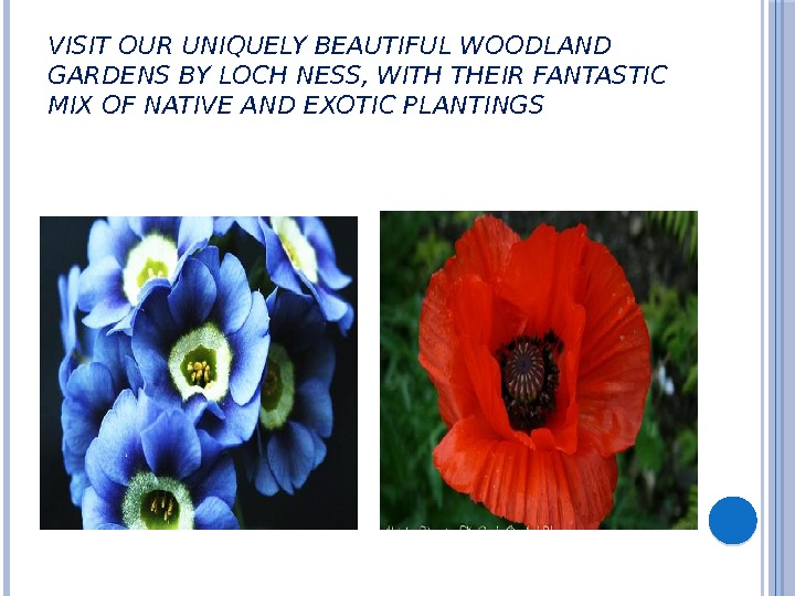 VISIT OUR UNIQUELY BEAUTIFUL WOODLAND GARDENS BY LOCH NESS, WITH THEIR FANTASTIC MIX OF NATIVE AND