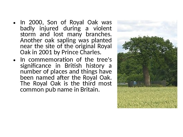• In 2000,  Son of Royal Oak was badly injured during a violent storm