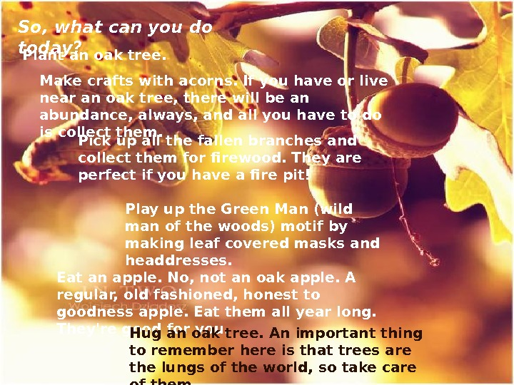 So, what can you do today? Plant an oak tree. Make crafts with acorns. If you