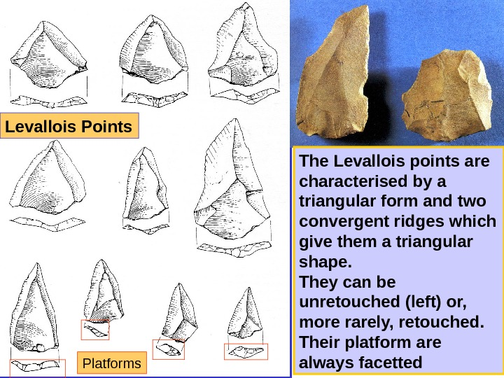 The Levallois points are characterised by a triangular form and two convergent ridges which