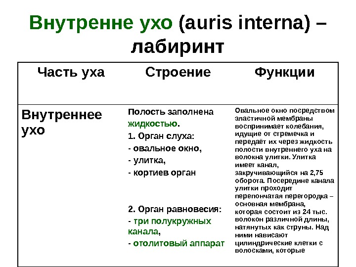 Внутренне  ухо ( auris  interna ) – лабиринт Часть уха Строение Функции Внутреннее ухо