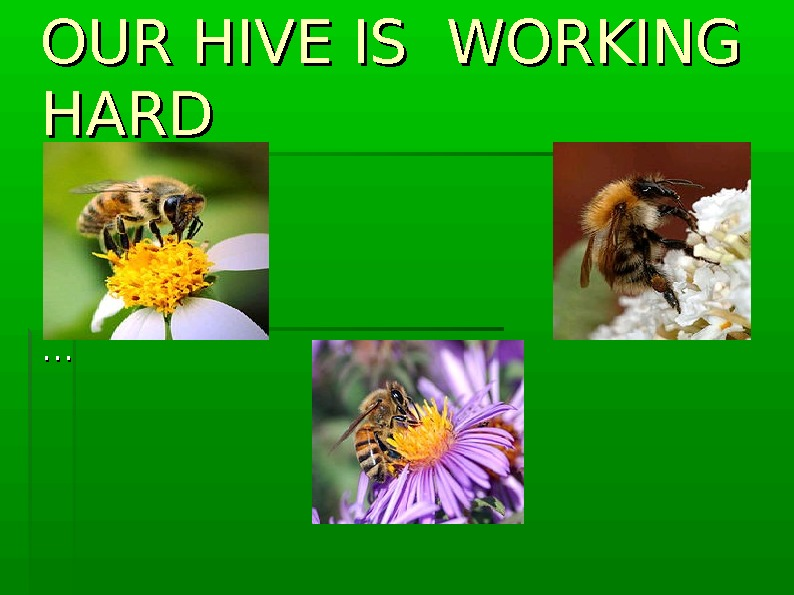 OUR HIVE IS WORKING HARD ……