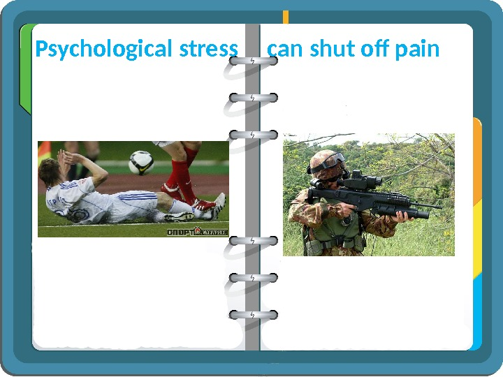 Psychological stress  can shut off pain