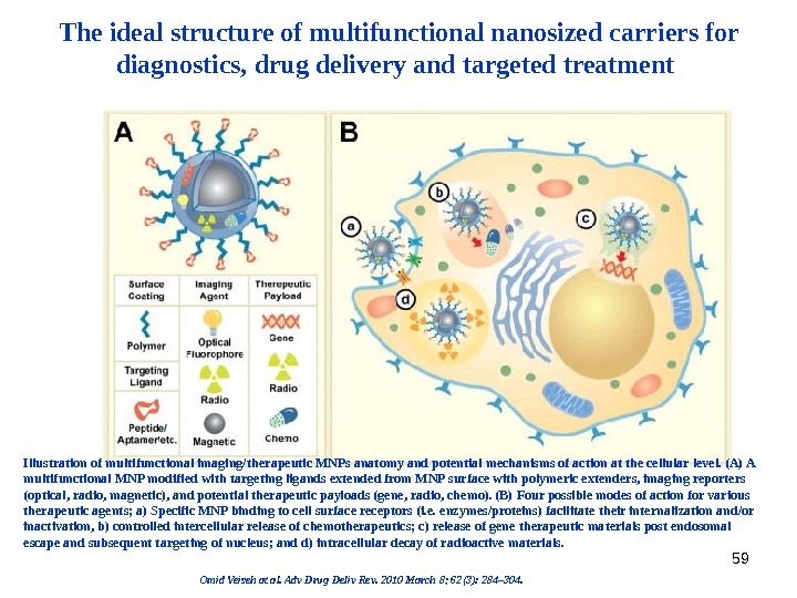 59 The ideal structure of multifunctional nanosized carriers for diagnostics, drug delivery and targeted treatment Illustration