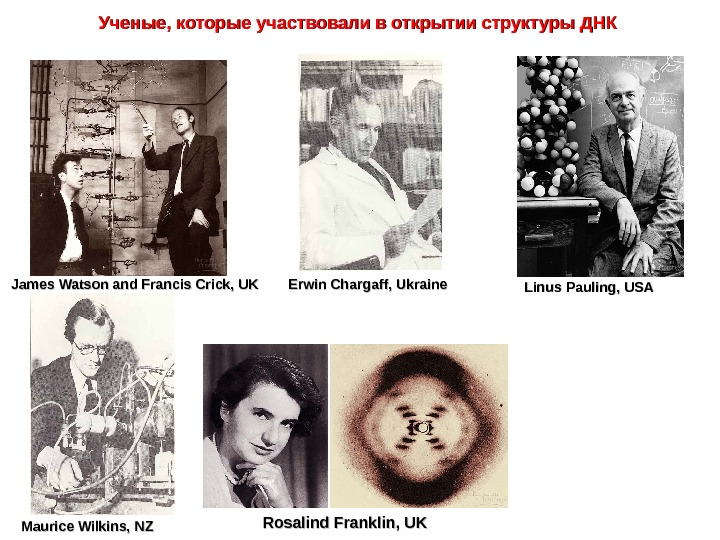 James Watson and Francis Crick, UK Erwin Chargaff, Ukraine Linus Pauling, USA Maurice Wilkins, NZ Rosalind
