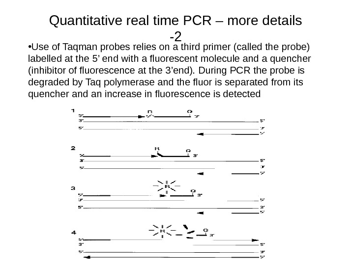• Use of Taqman probes relies on a third primer (called the probe) labelled at