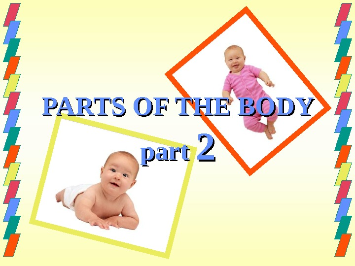 PARTS OF THE BODY part 22