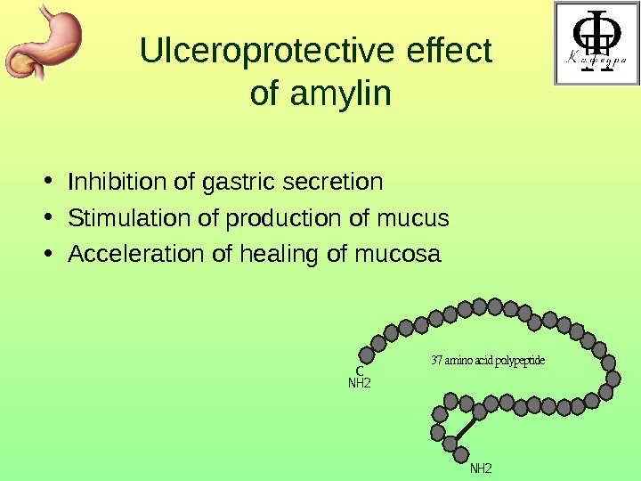 Ulceroprotective effect of amylin • Inhibition of gastric secretion • Stimulation of production of