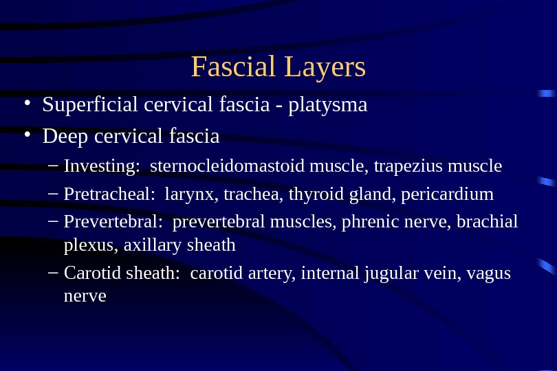 Fascial Layers • Superficial cervical fascia - platysma • Deep cervical fascia – Investing:  sternocleidomastoid