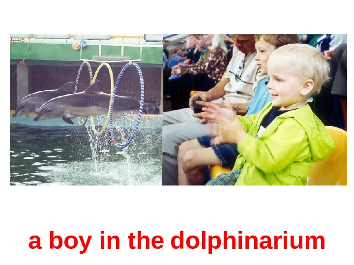 a boy in the  dolphin arium