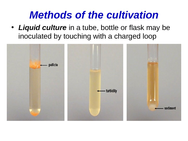 Methods of the cultivation • Liquid culture in a tube, bottle or flask may be inoculated