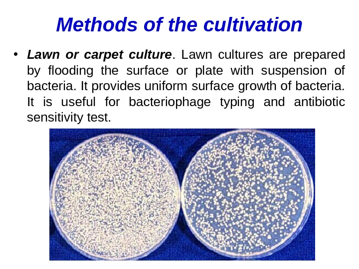 Methods of the cultivation • Lawn or carpet culture.  Lawn cultures are prepared by flooding