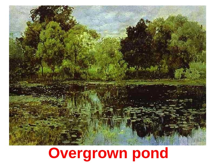 Overgrown pond