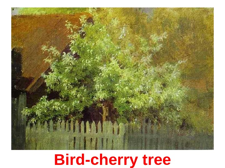 Bird-cherry t ree