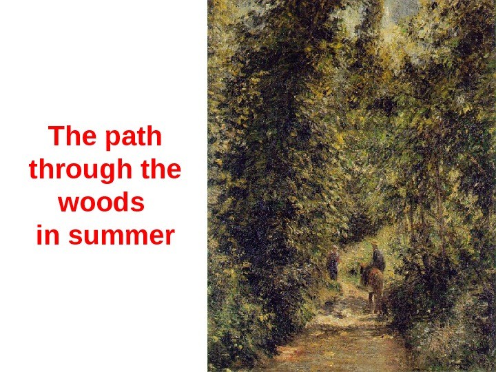 The p ath through the woods in summer