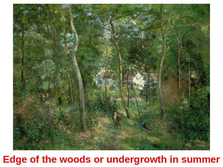 Edge of the woods or undergrowth in summer
