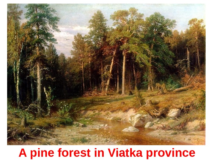 A p ine forest in Viatka province