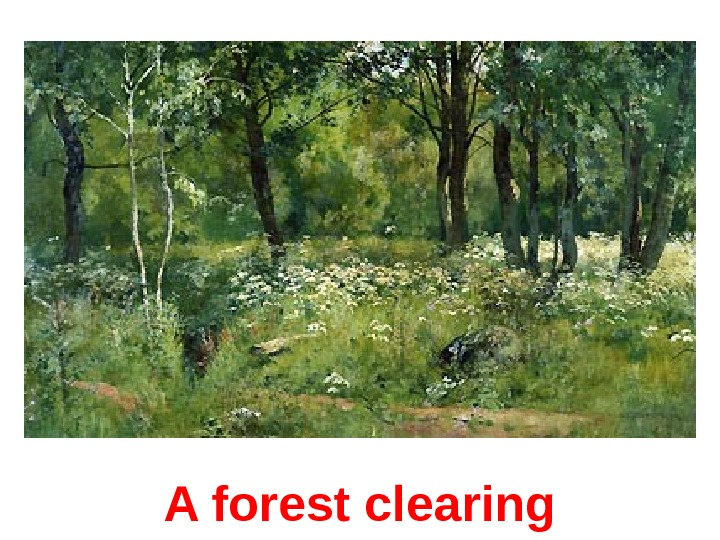 A forest clearing