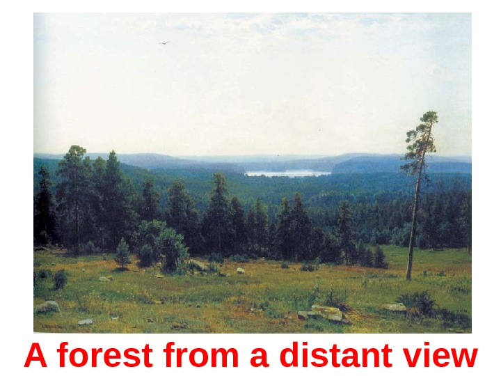 A forest from a distant view