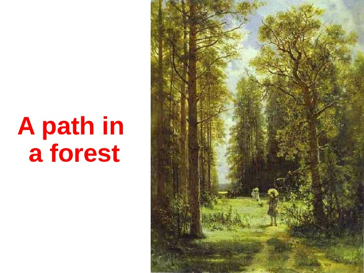 A p ath in a forest