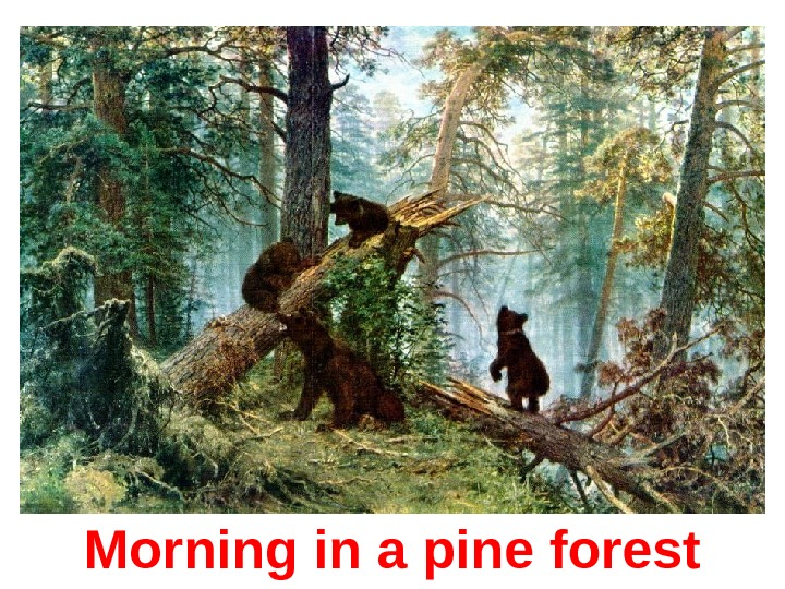 Morning in a pine forest